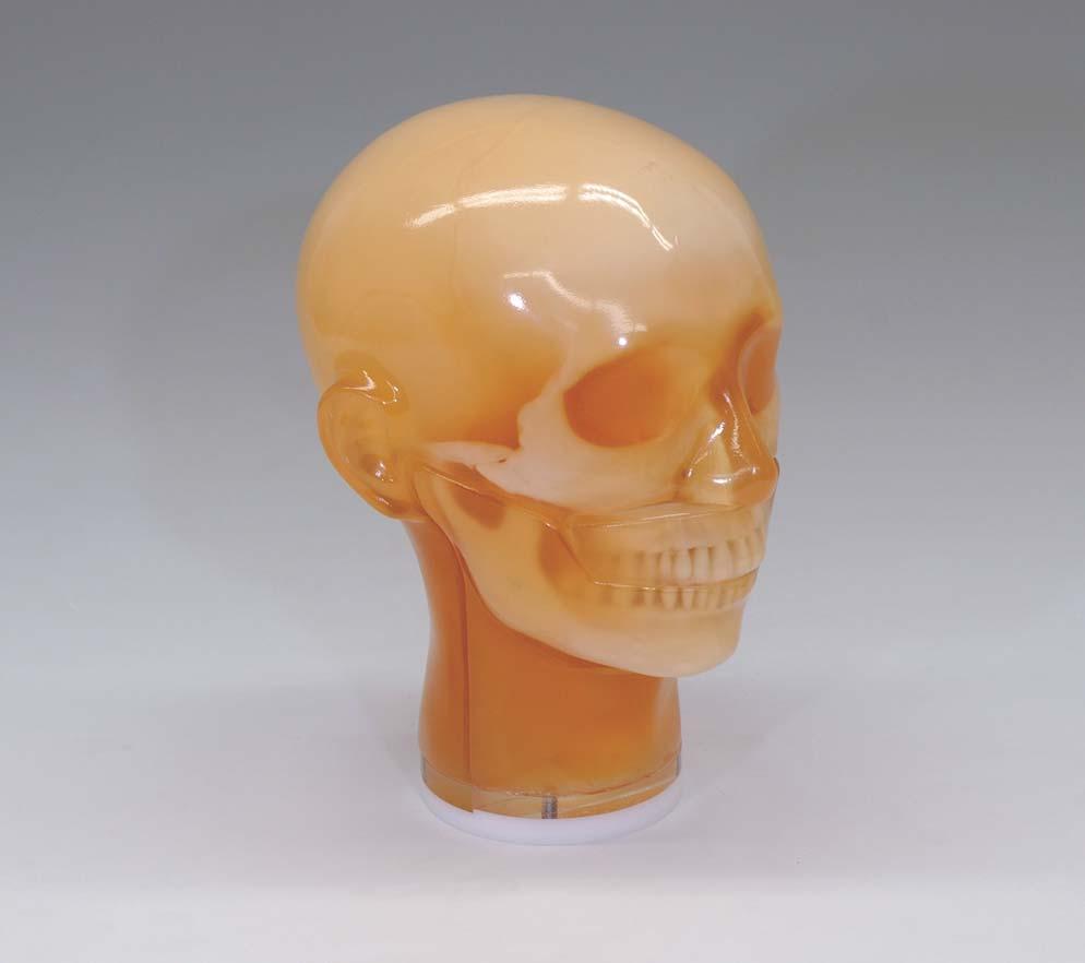X_01_Dental_Head